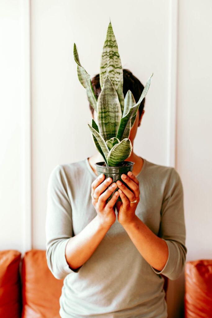 plants peaceful home