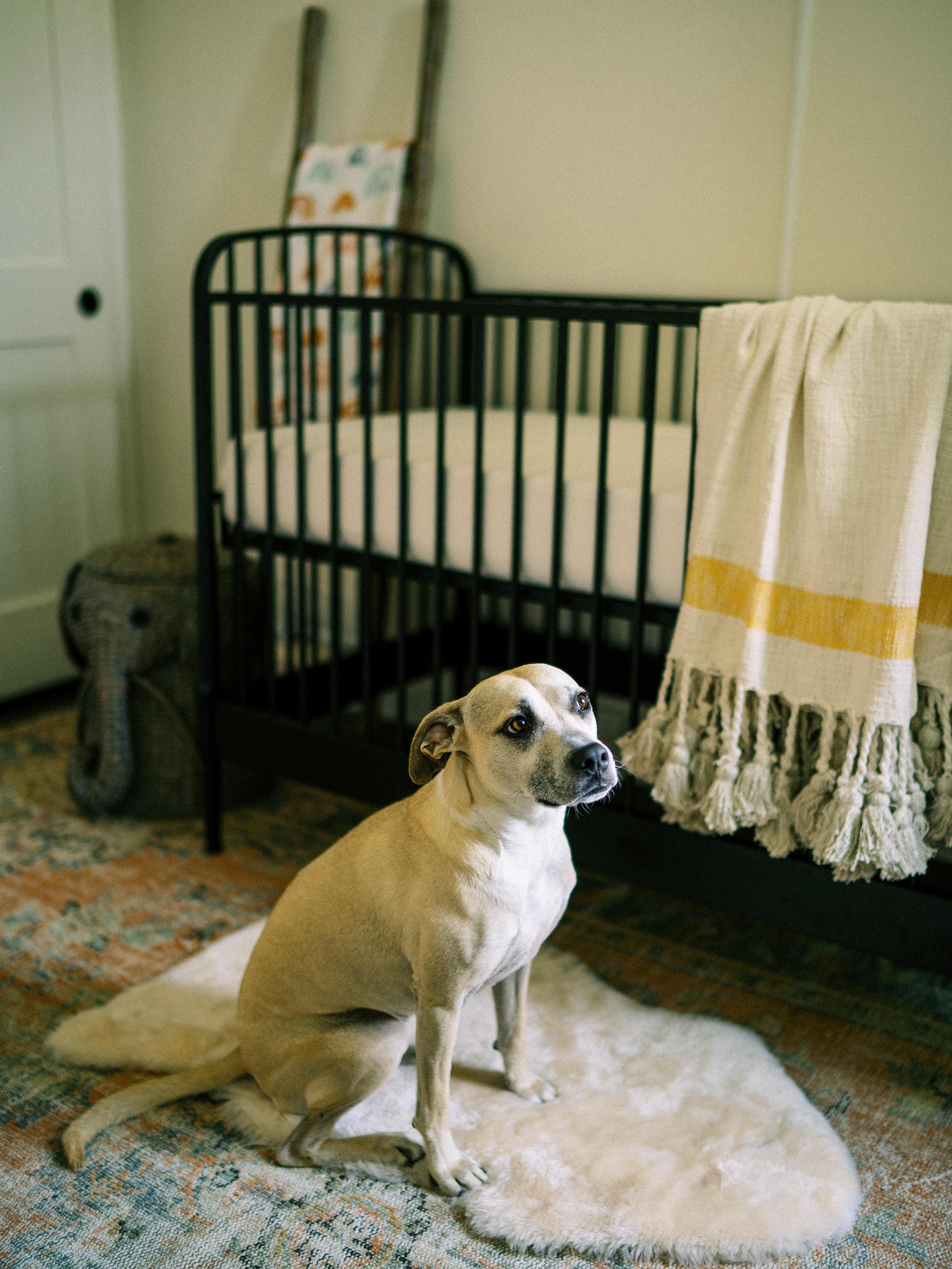 modern farmhouse nursery crib