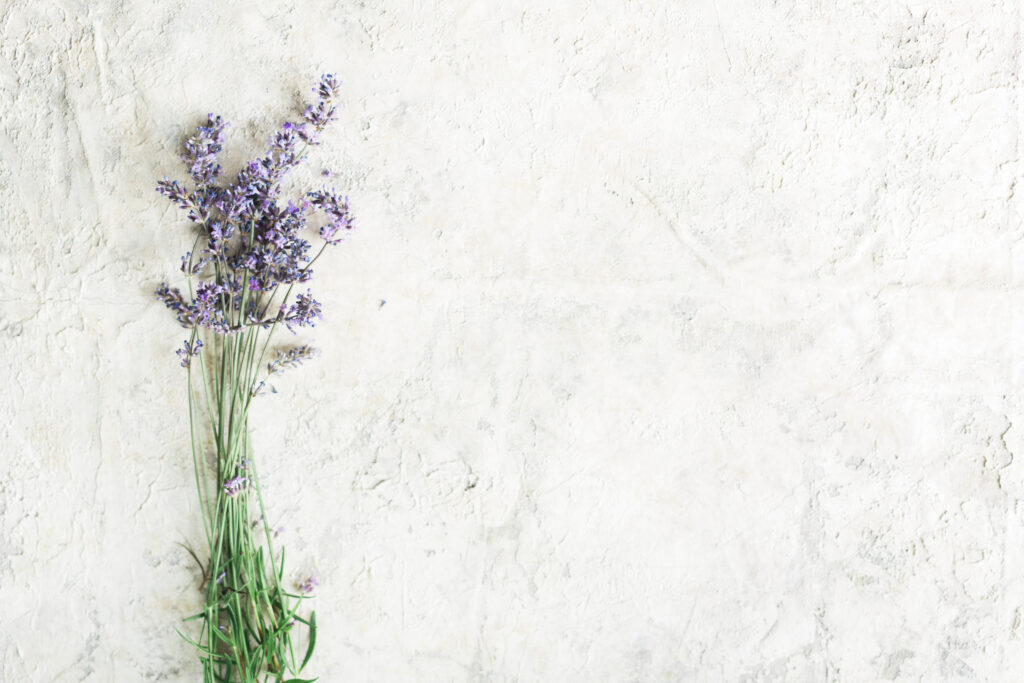 lavender florals on white background